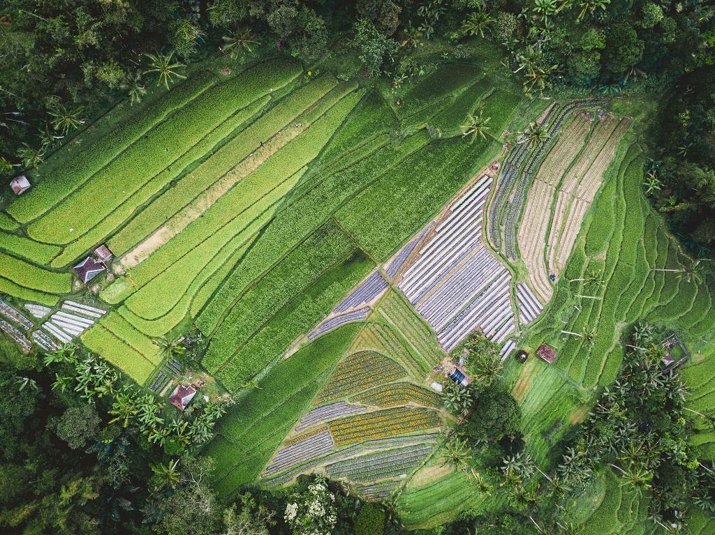آبیاری مزارع کشاورزی با نانوحباب